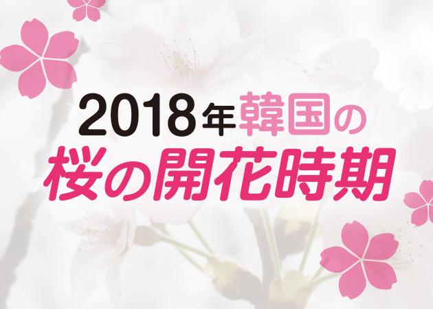 2018年韓国の桜開花・桜まつりの情報をチェック!
