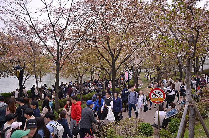 桜を見に行った日が日曜日でちょうど、石村湖桜まつり