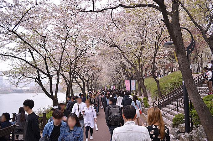 散り気味の桜でしたが、綺麗に咲いている場所もかすかにあり、お花見を楽しむことが出来ました。