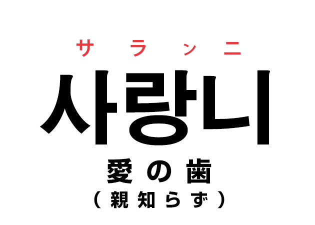 親知らずは韓国語で「사랑니 サランニ(愛の歯)」と言うの?!なんで??